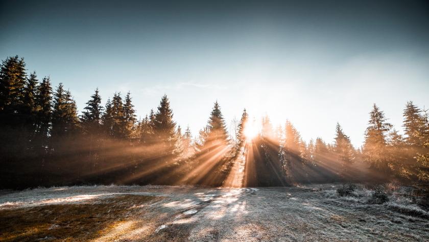 冬季森林冰冻早晨阳光4k风景壁纸